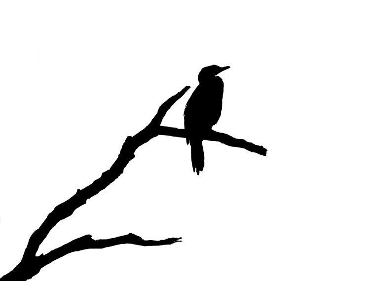 silhouette-blog_cormorant