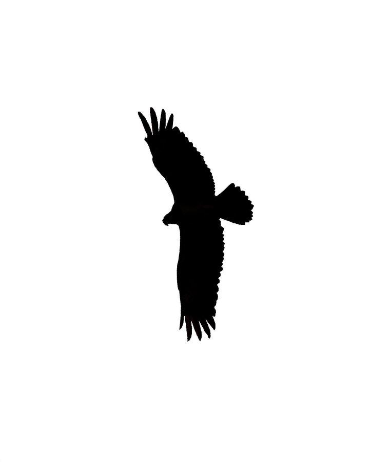 silhouette_blog_osprey