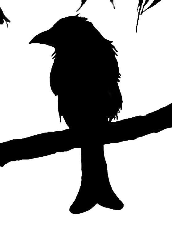 silhouette_blog_spangled-drongo