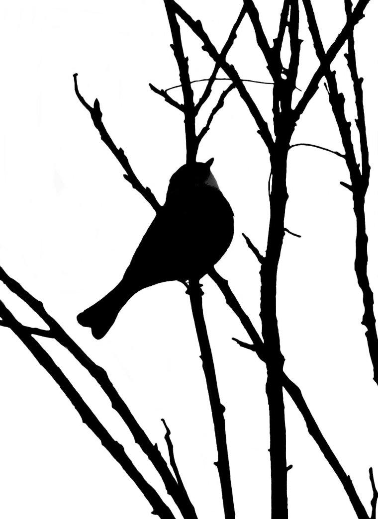 silhouette_blog_whistler