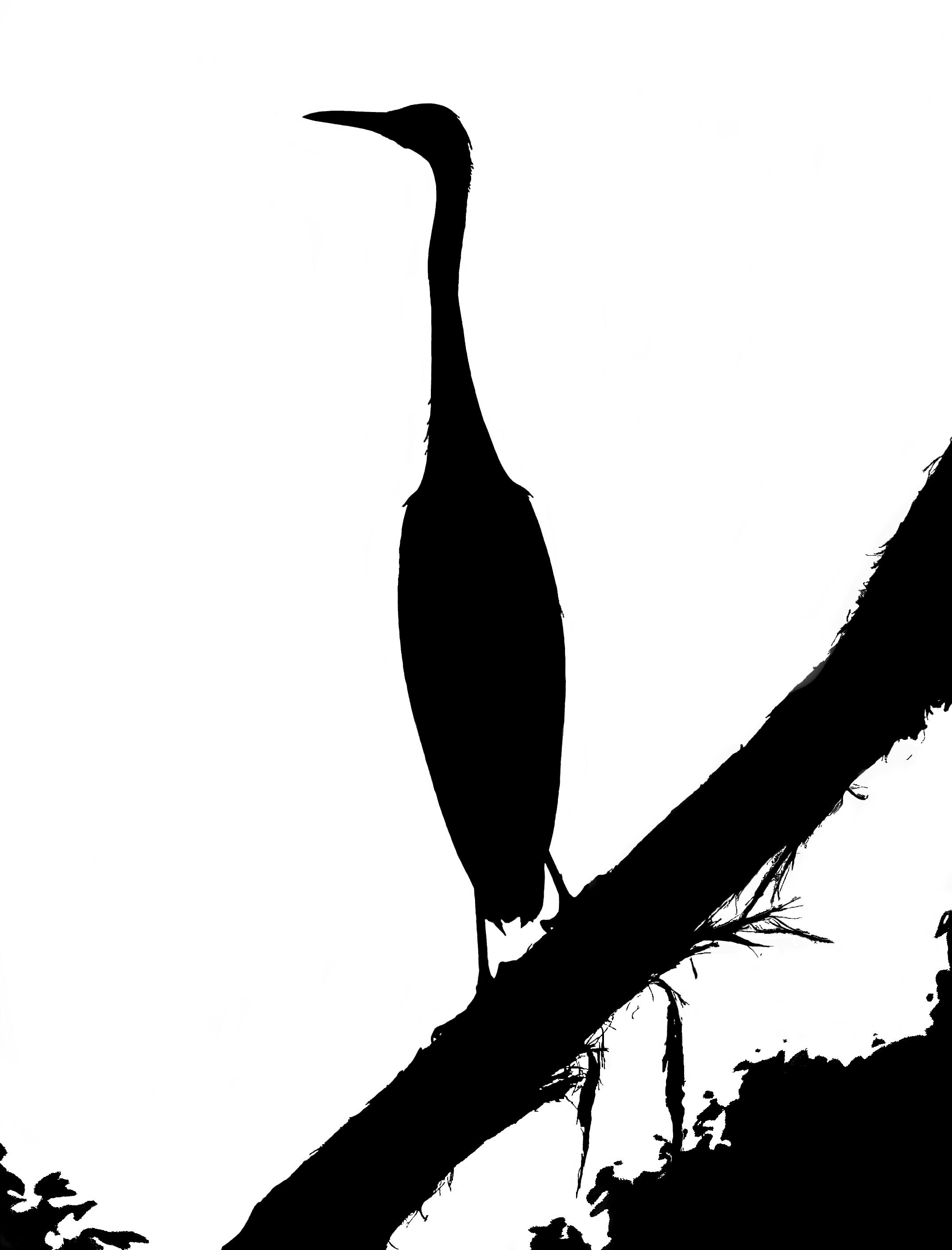 silhouette_blog_white-faced-heron