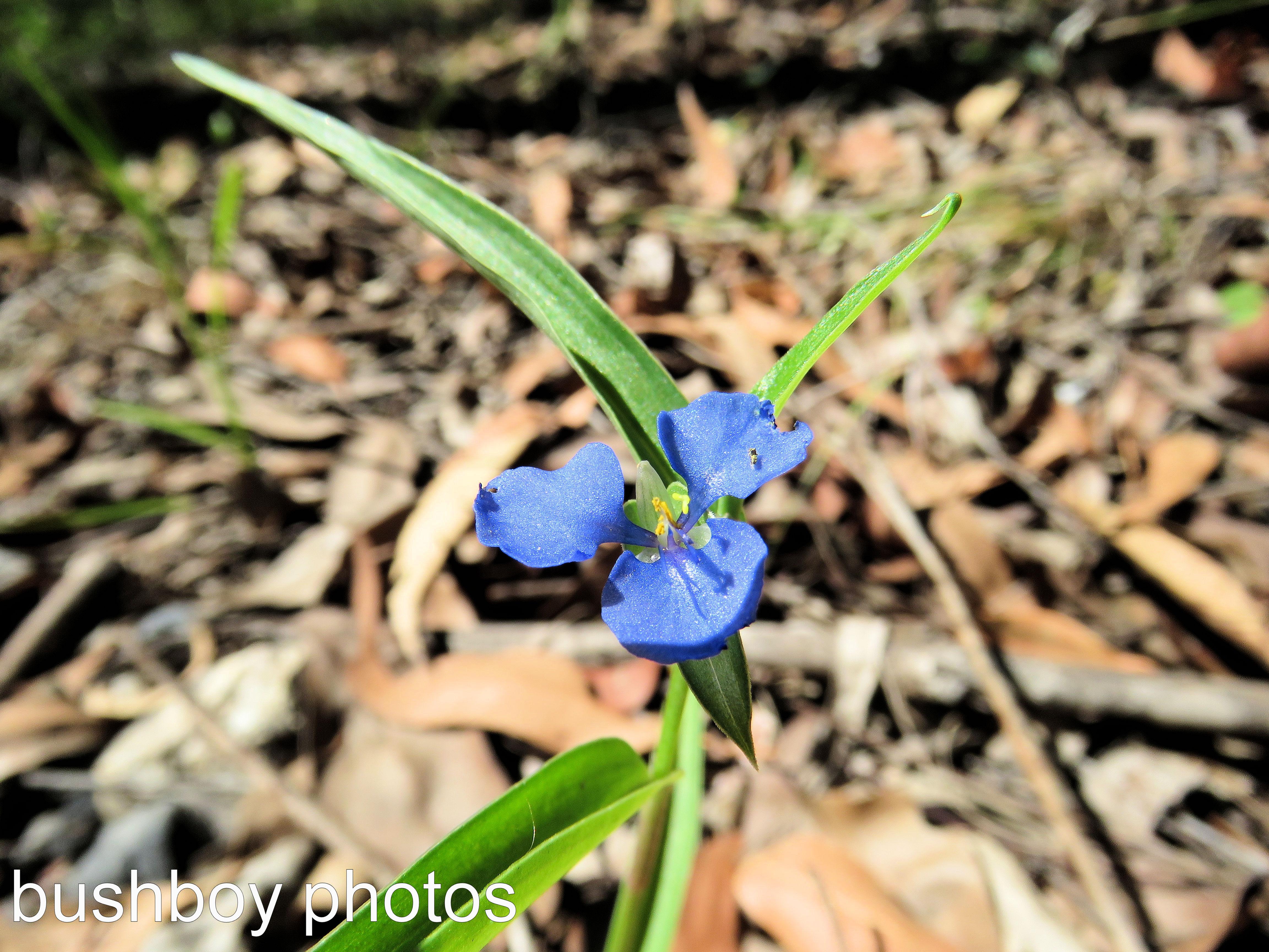 blue-flower_named_home_feb-2017