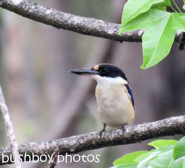 forest-kingfisher_front_named_home_jan-2017