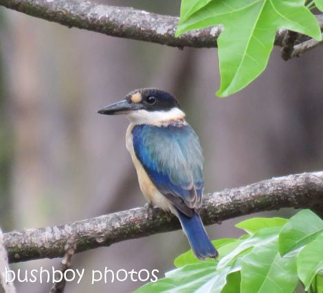 forest-kingfisher_named_home_jan-2017
