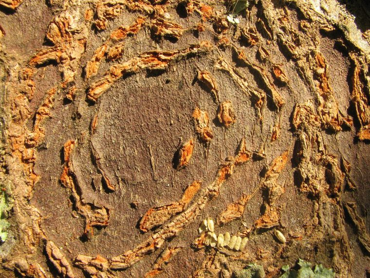 tree-bark-patterns_blog_foambark_binna-burra