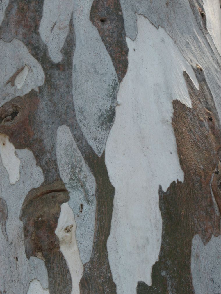 tree-bark-patterns_blog_plane-tree_sydney