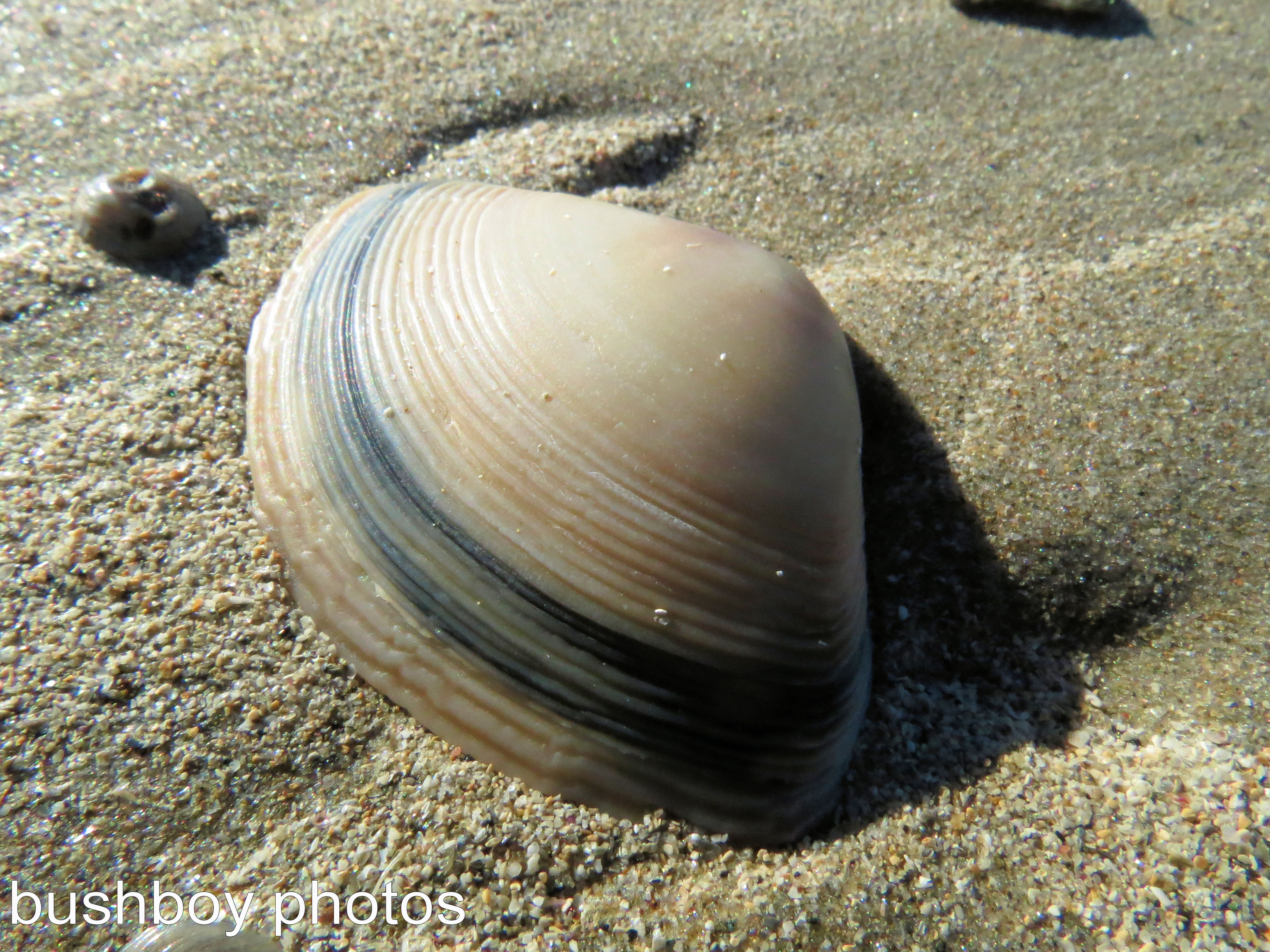 blog_beach-art_the-shell