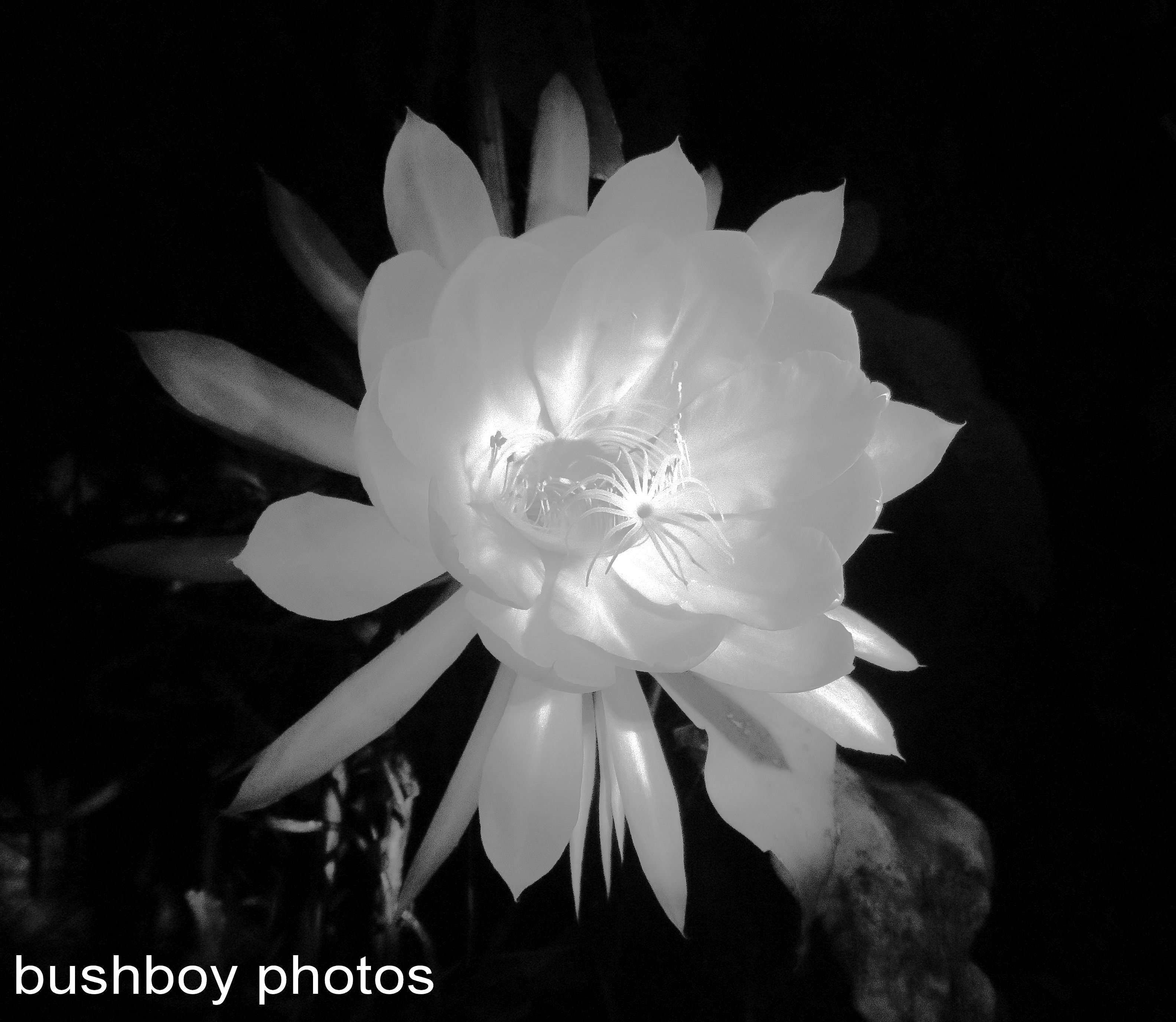 blog_black and white_flower