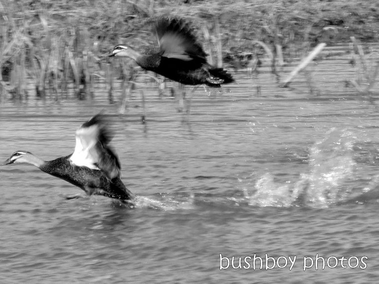 blog_black and white_flying