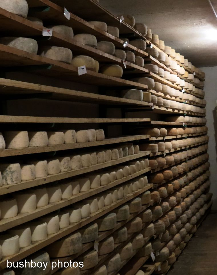room of cheese