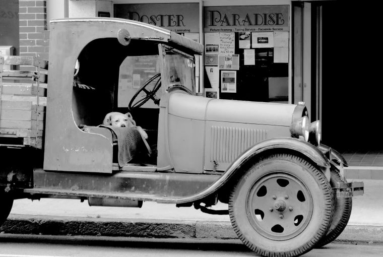 traces-of-the-past_bw_old-truck-dog_murwillumbah