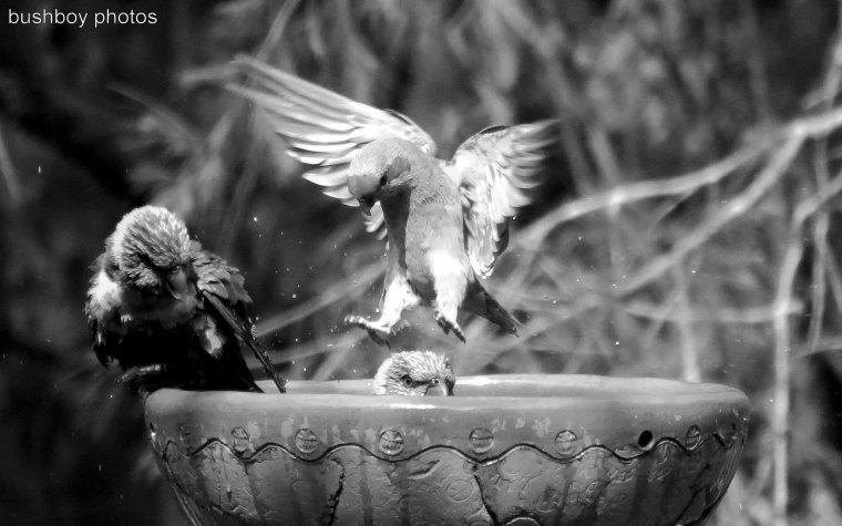 170422_bandw_letter p_parrots