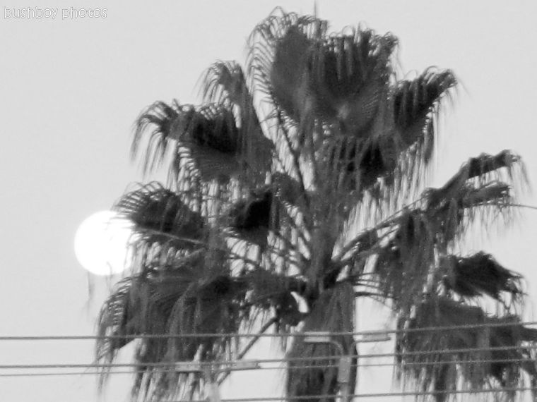 170509_bandw challenge_palm moon