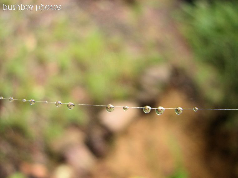 170509_blog challenge_rain_drops