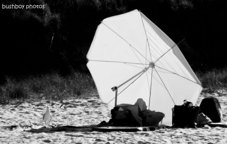 170512_bandw challenge_letter u_umbrella seagull