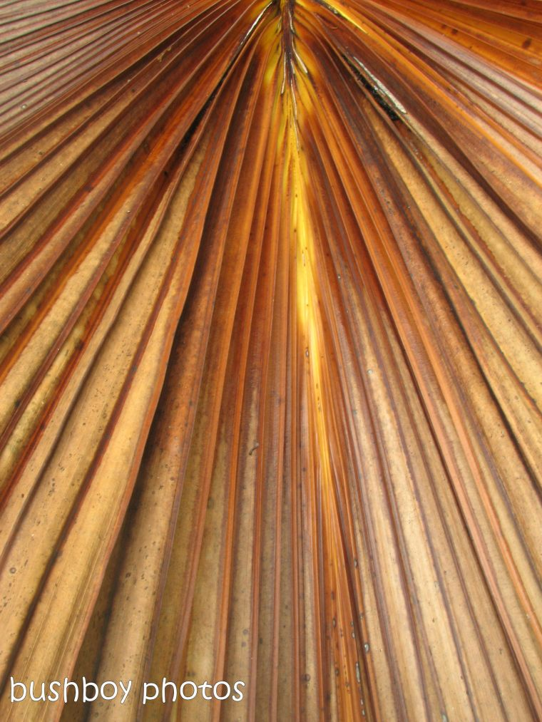 170519_blog challenge_all one colour_palm frond