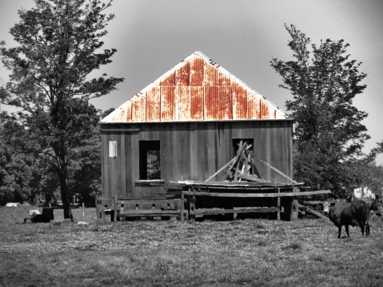 170609_blog challenge_buildings_shed and cow