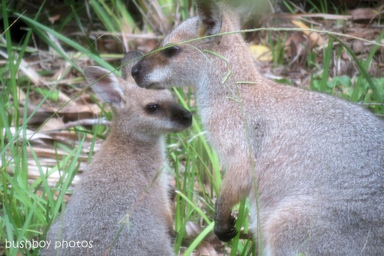 170609_blog challenge_tender_wallabies01