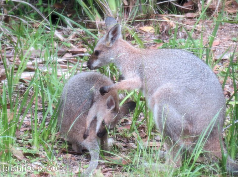 170609_blog challenge_tender_wallabies04