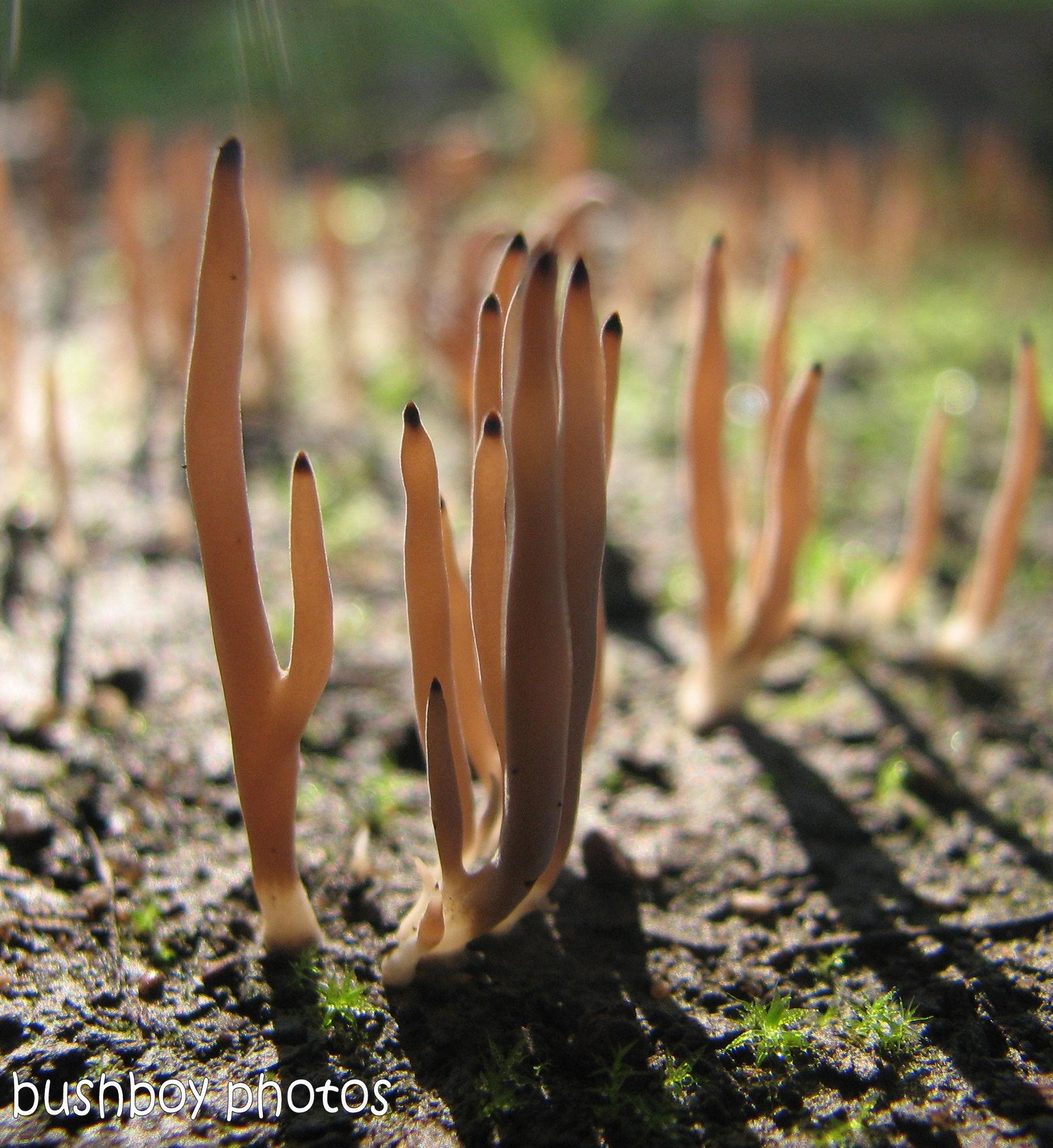 170613_blog challenge_unusual_fungi