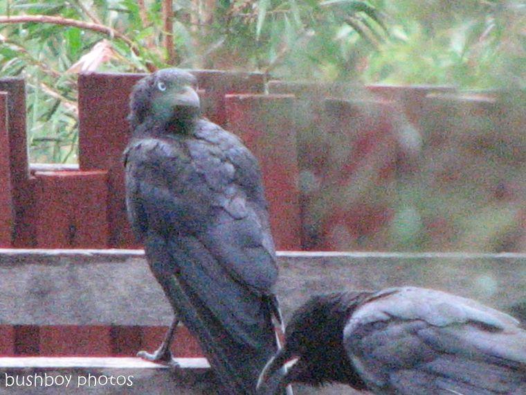 170615_blog challenge_focus_ravens