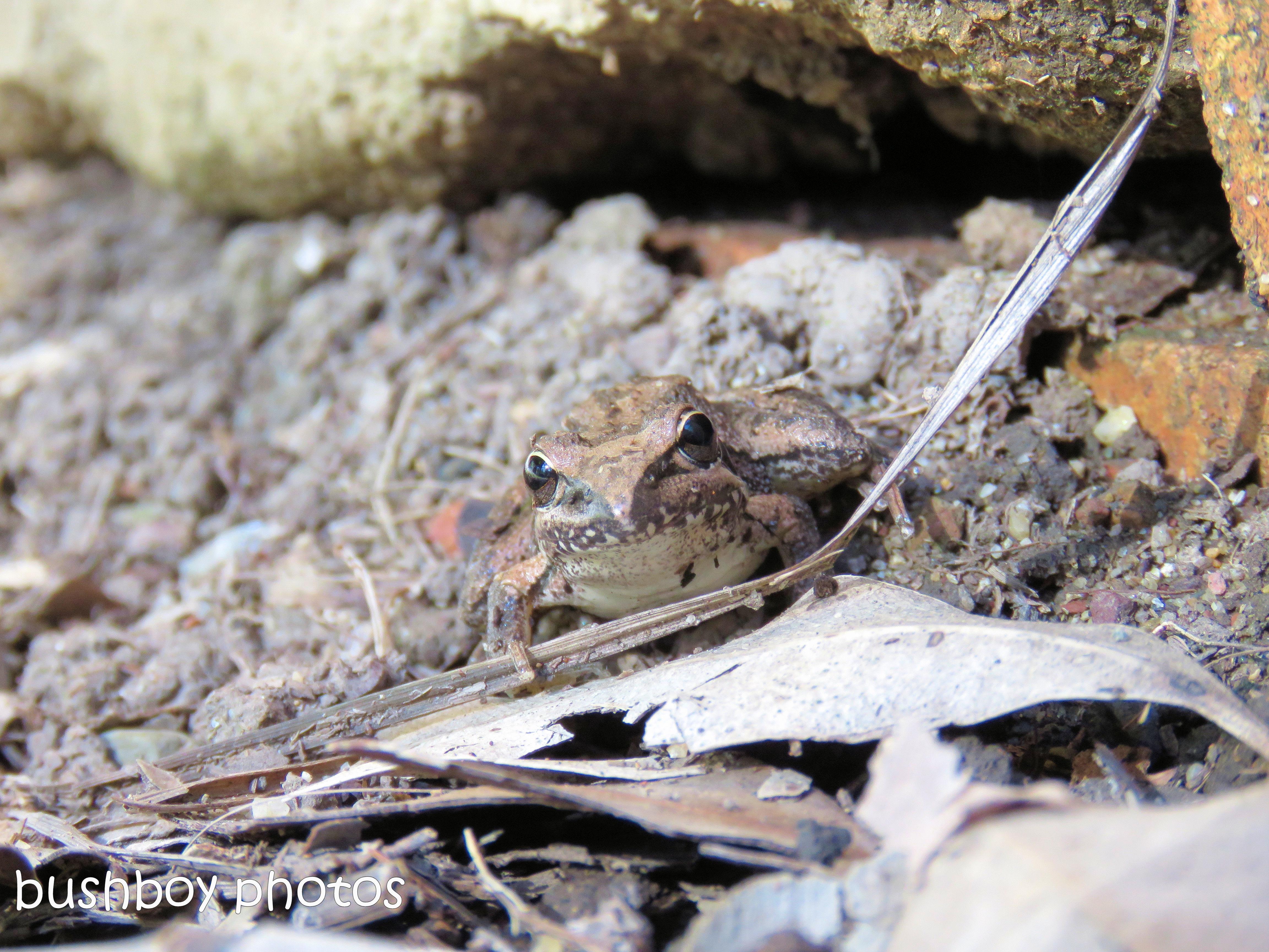 170622_blog challenge_vision_frog
