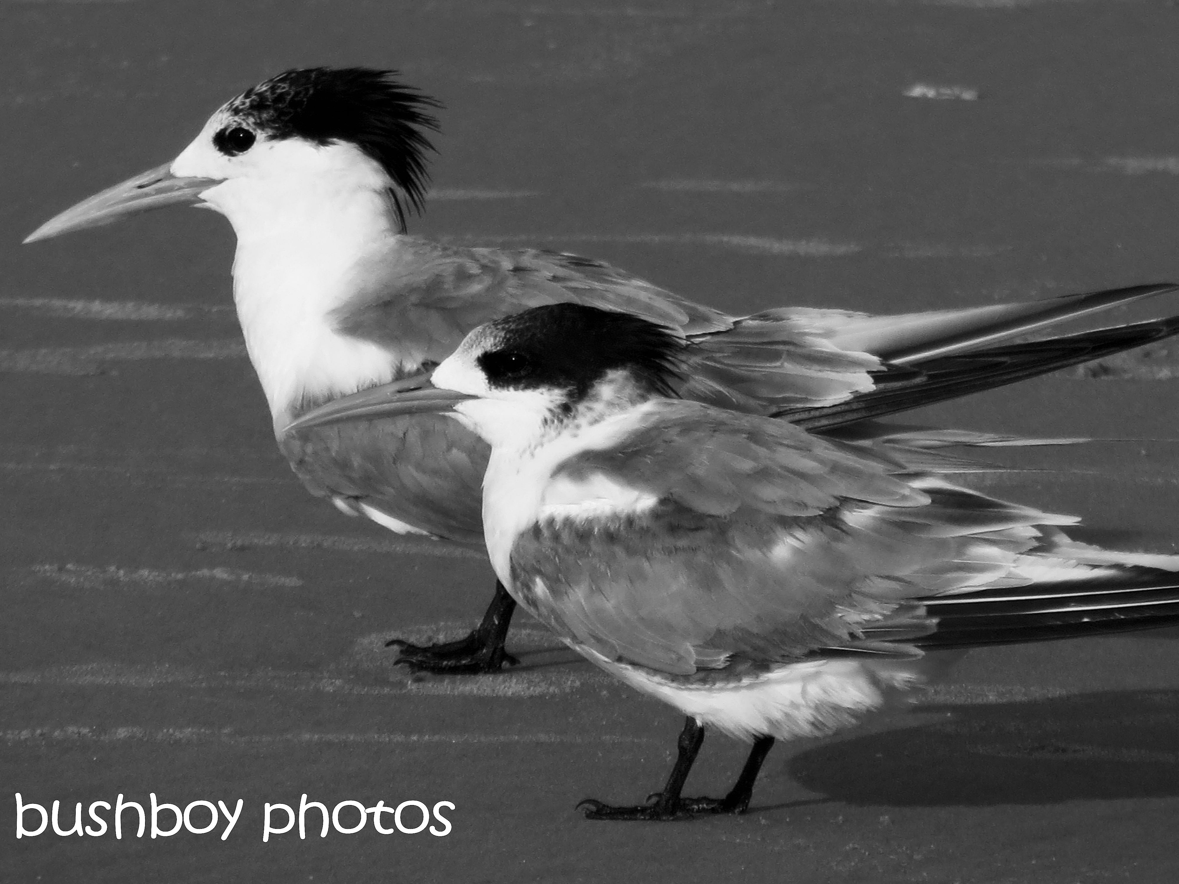 170623_bandw challenge_two of anything_terns