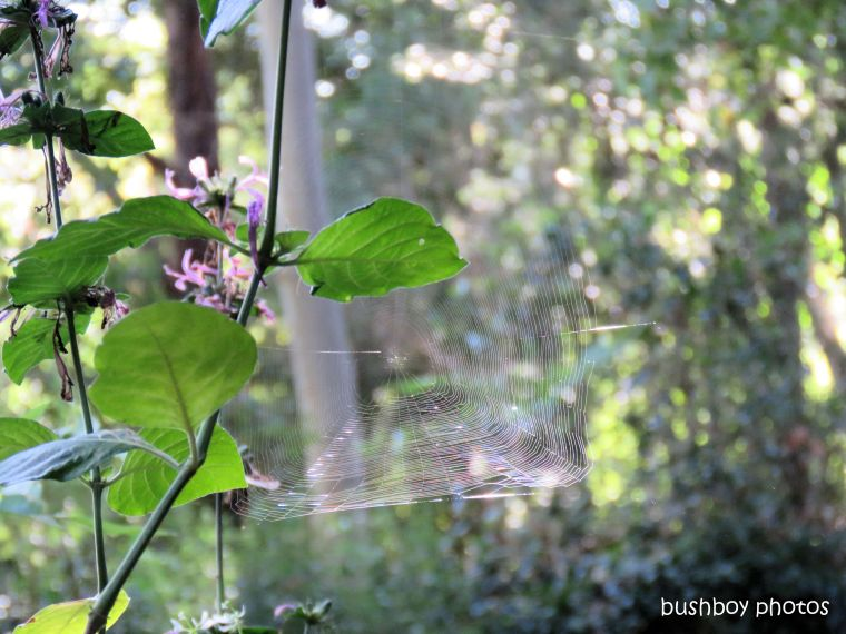 spiders web_named_binna burra_may 2017