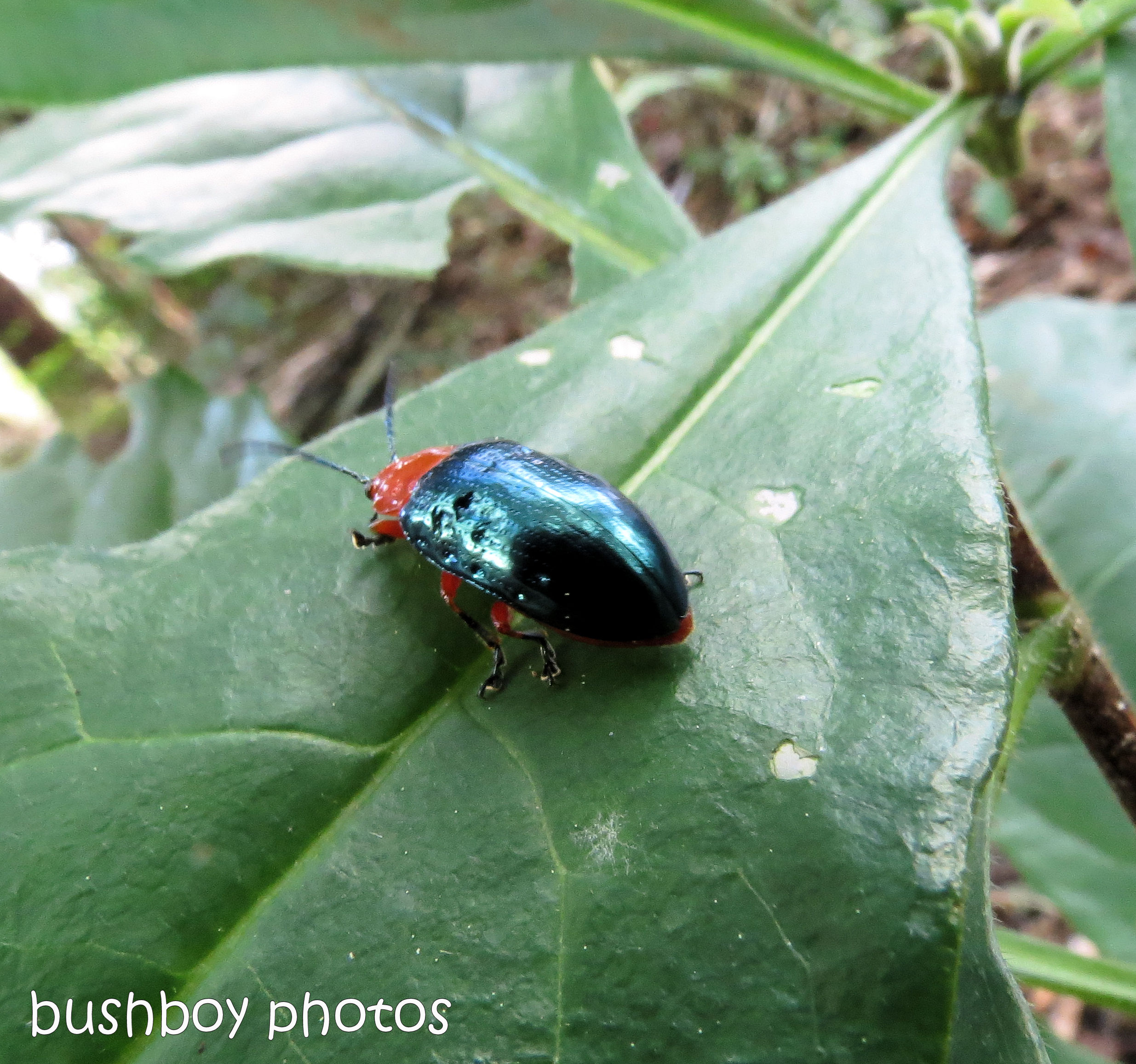 170711_blog challenge_bugs_beetle_red green