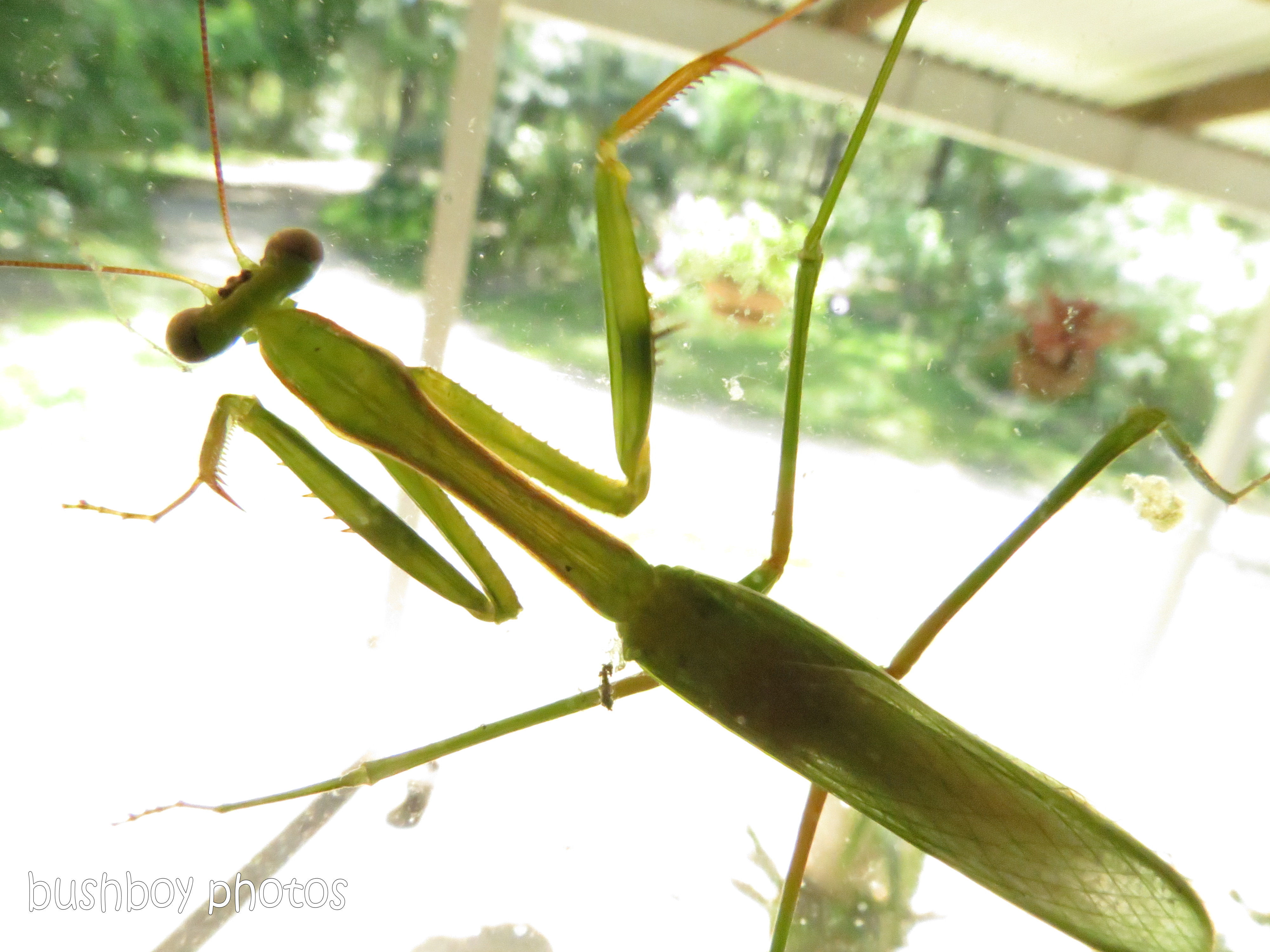 170711_blog challenge_bugs_praying mantis