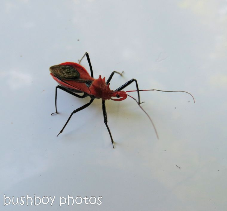 170711_blog challenge_bugs_red insect