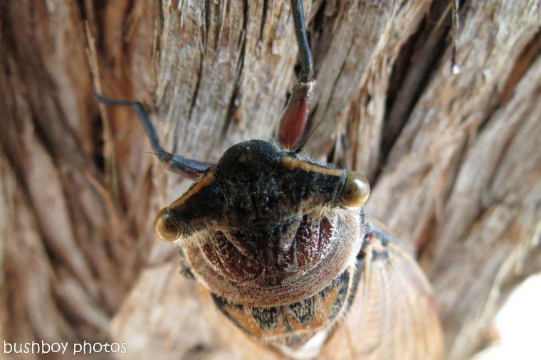 170711_blog challenge_bugs_tiger cicada