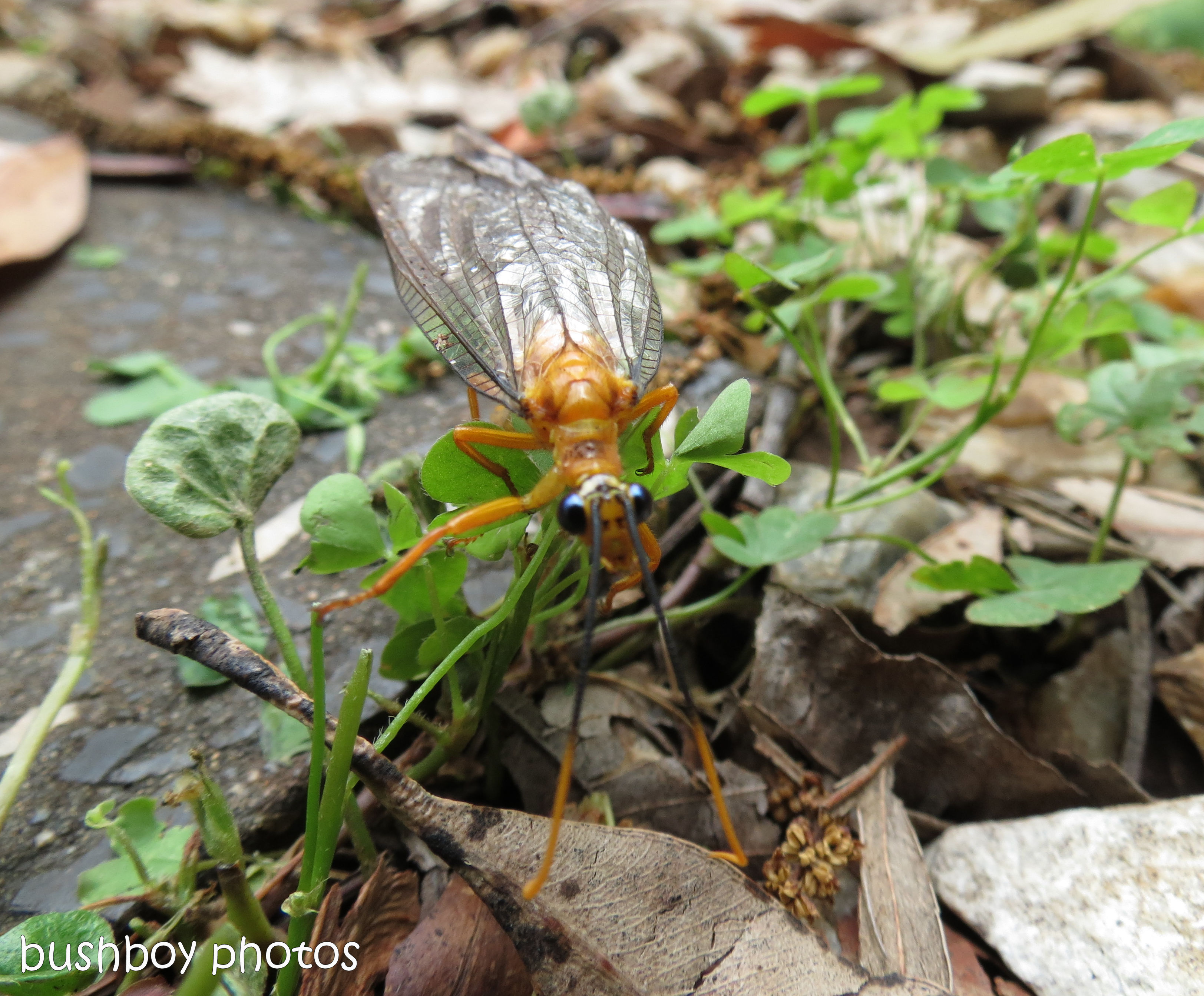 170711_blog challenge_bugs_yellow insect