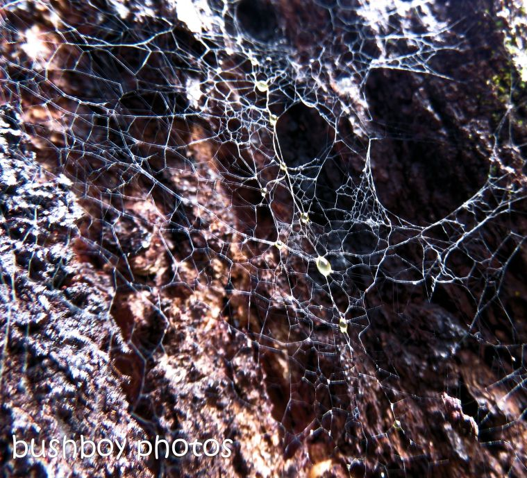 spiders web_ironbark_named_home_june 2017