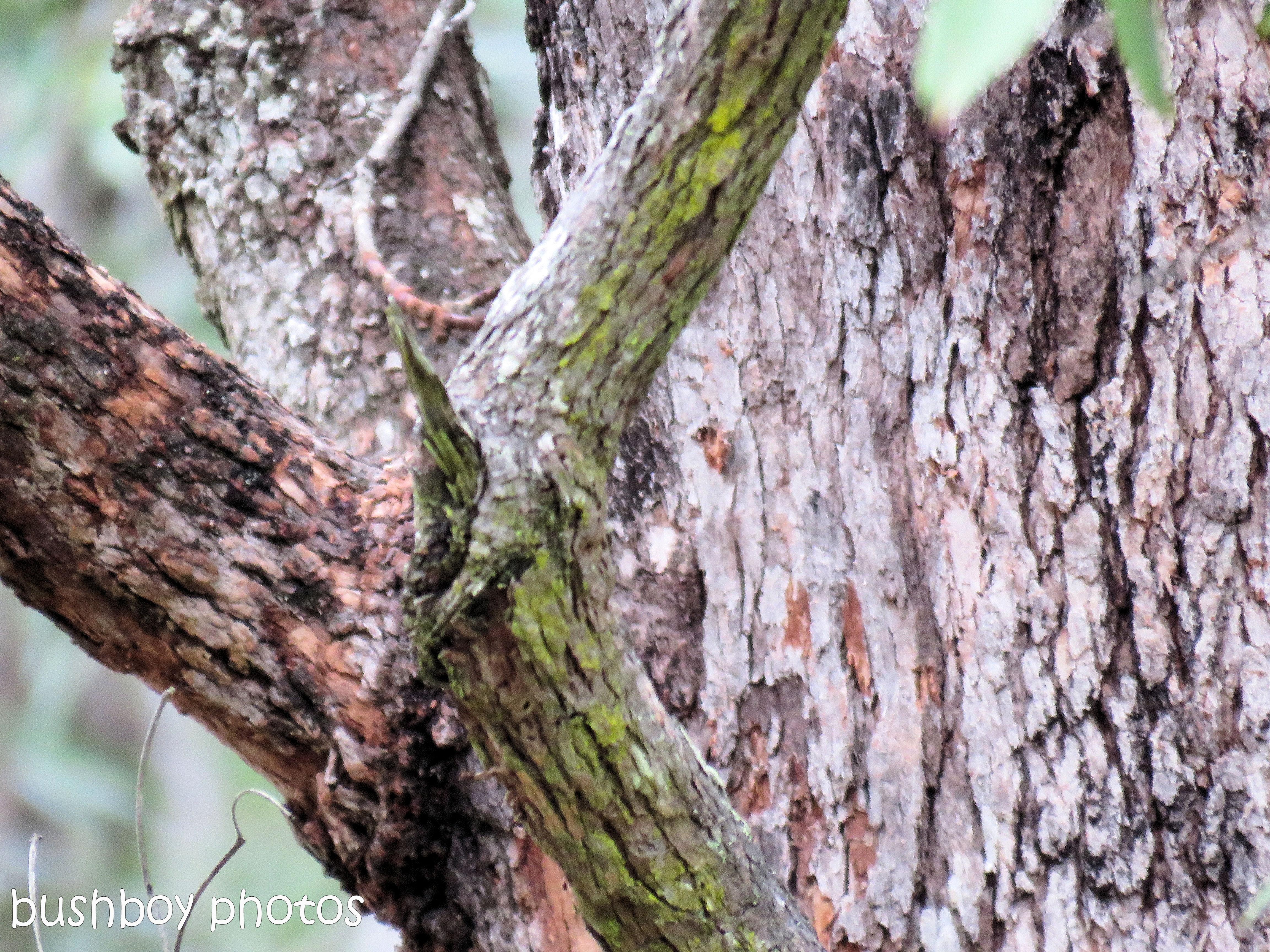 the tree bark_named_home_june 2017