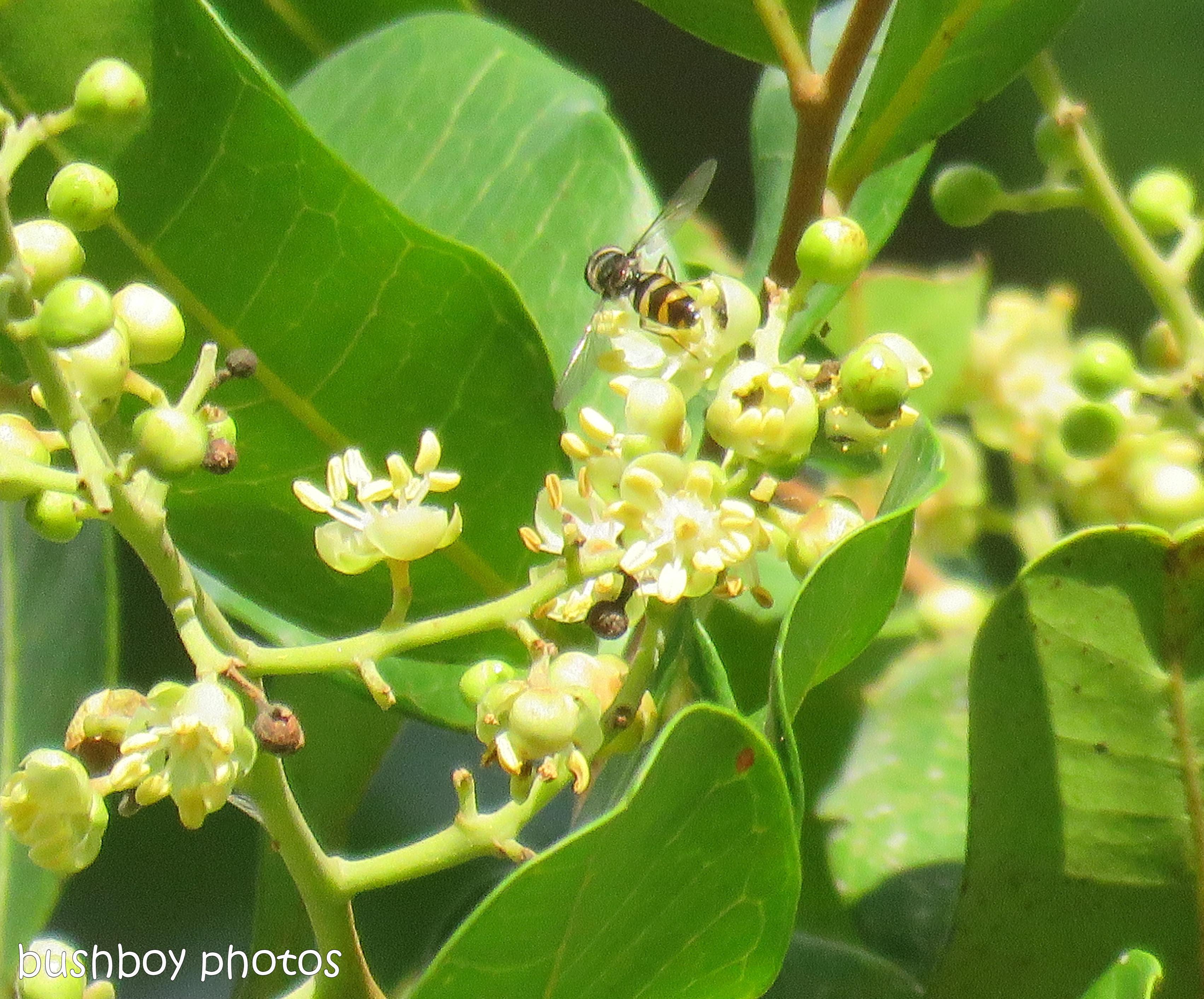 tuckaroo flower02_bees_named_home_june 2017