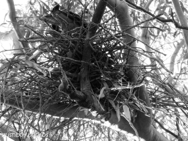 170816_bandw challenge_structure_kite nest