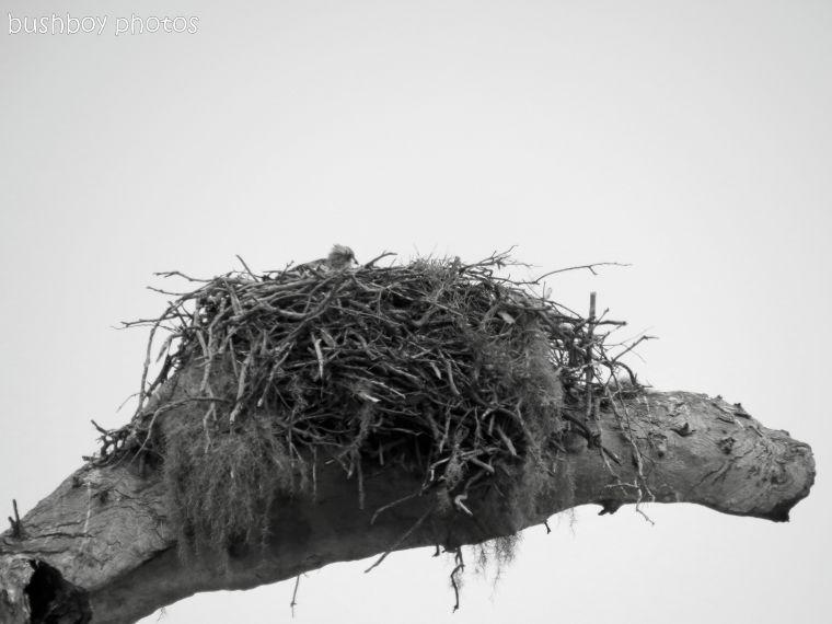 170816_bandw challenge_structure_osprey nest