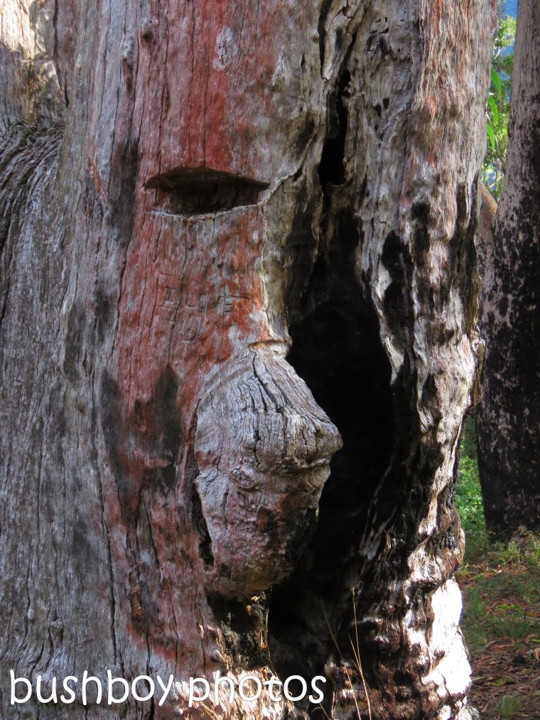 tree face_named_raspberry lookout_july 2017