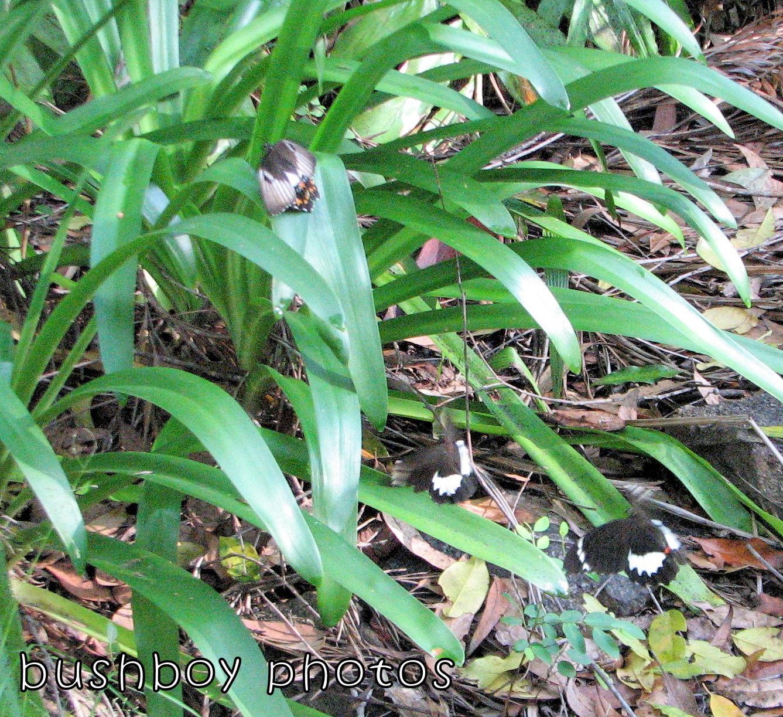 170907_word_intruding_orchard butterflies