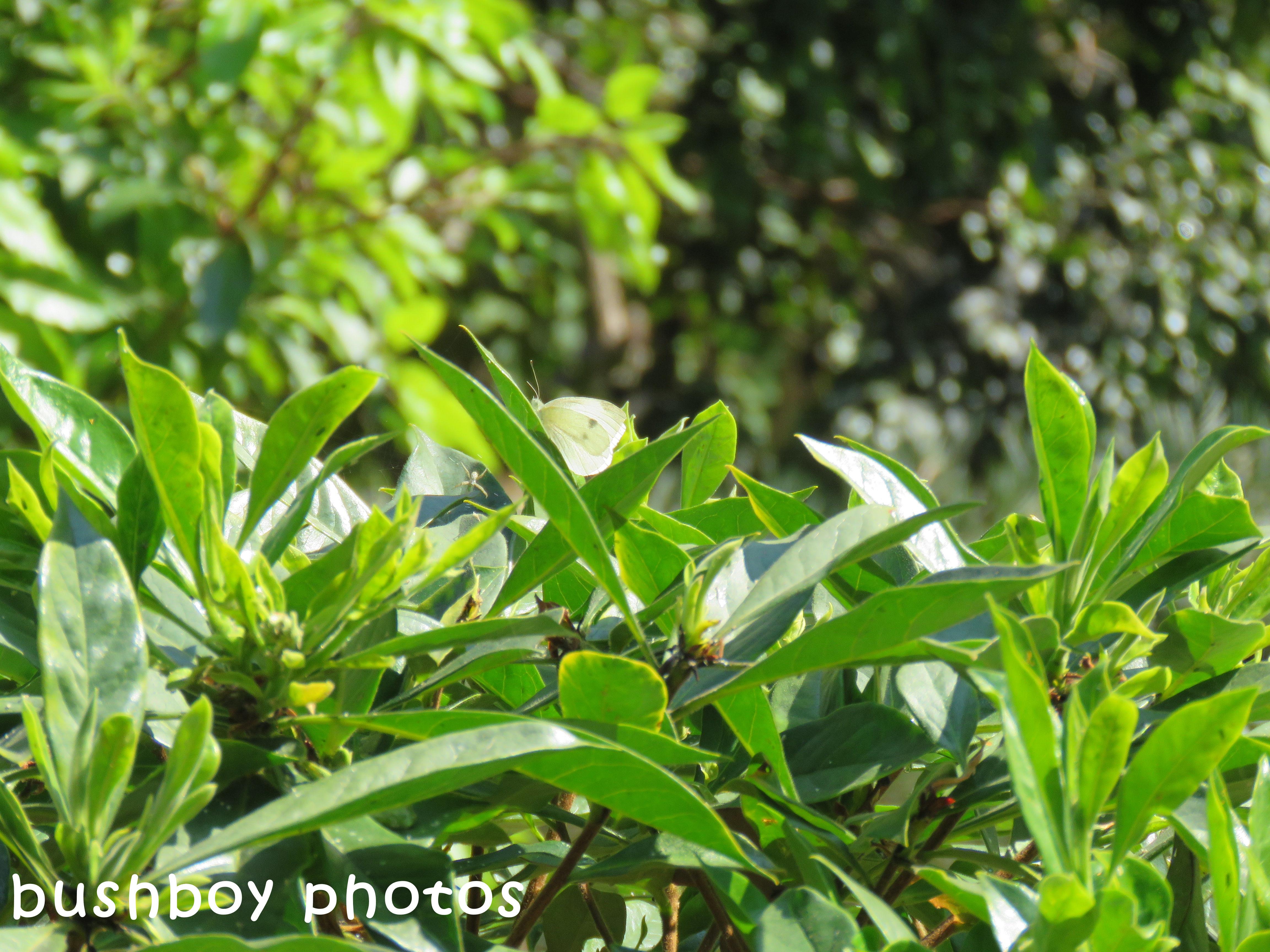 170914_blog challenge_hidden_butterfly