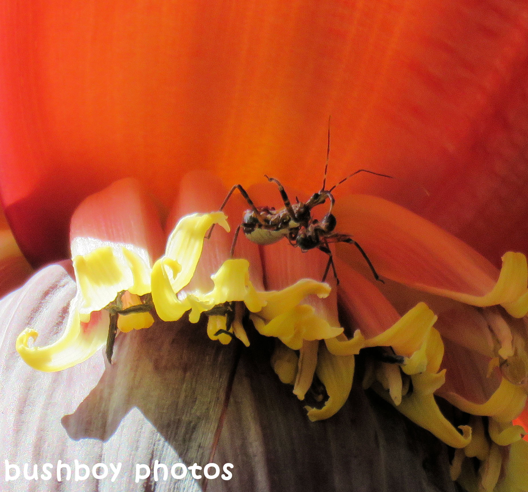 170917_blog challenge_six word saturday_asassin bug
