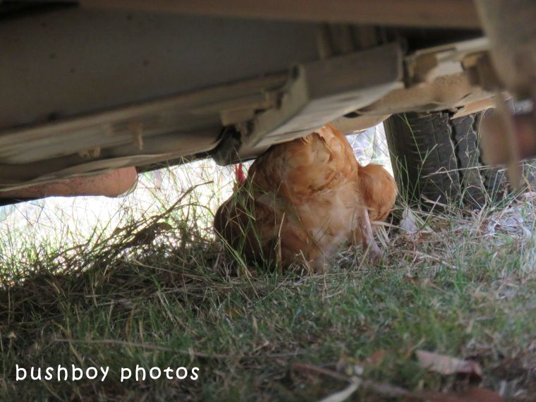 chook_under car_named_home_2017