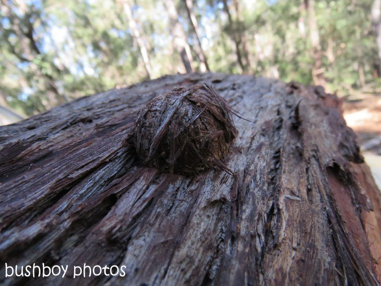 insect nest_named_home_august 2017
