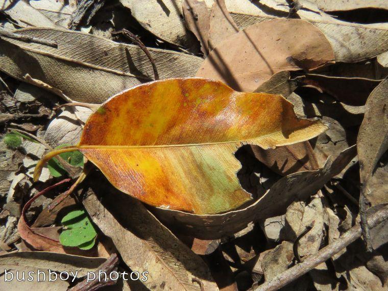 leaf_named_home_august 2017