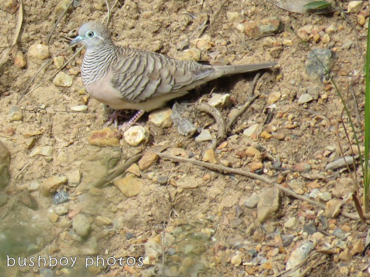 peaceful dove_named_home_august 2017