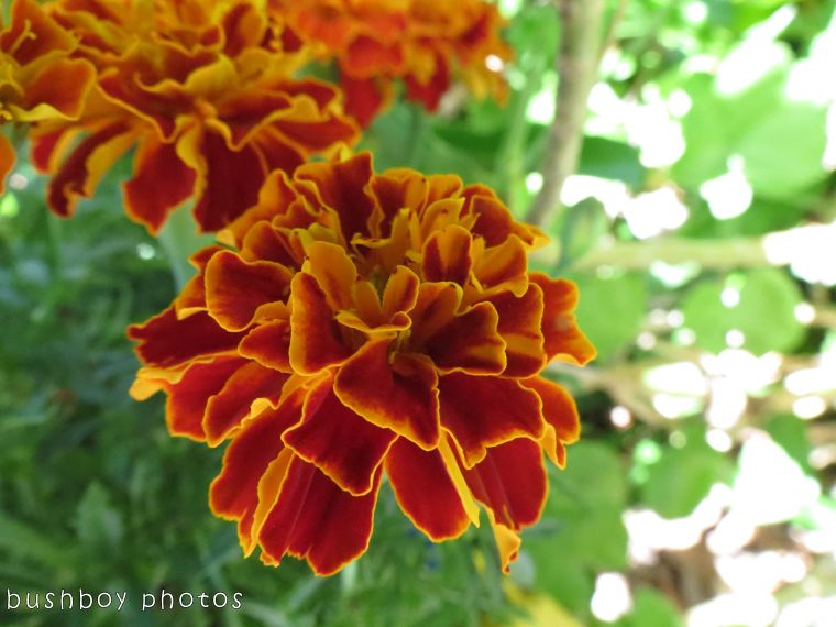 171017_orange flowers01
