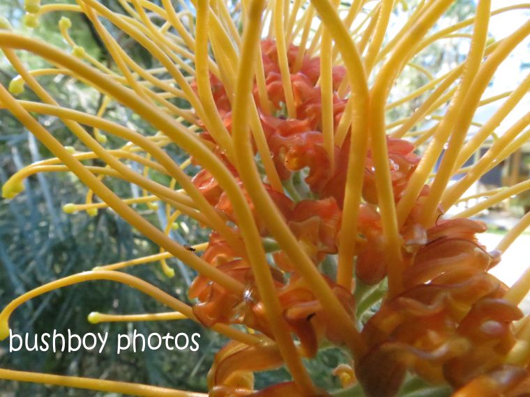 171017_orange flowers06