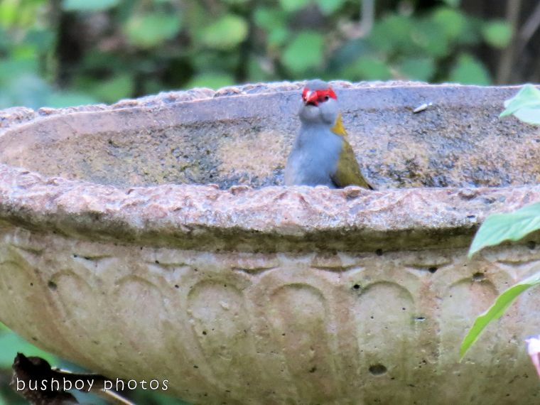 171018_blog challenge_letter I_birdbath03