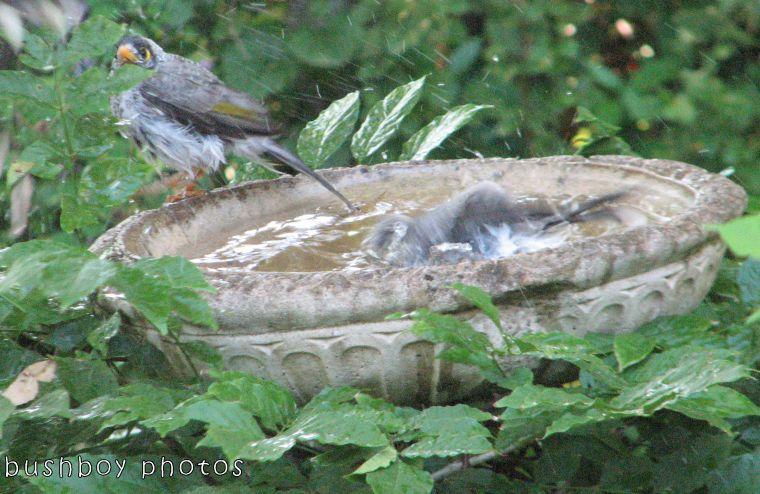 171018_blog challenge_letter I_birdbath04